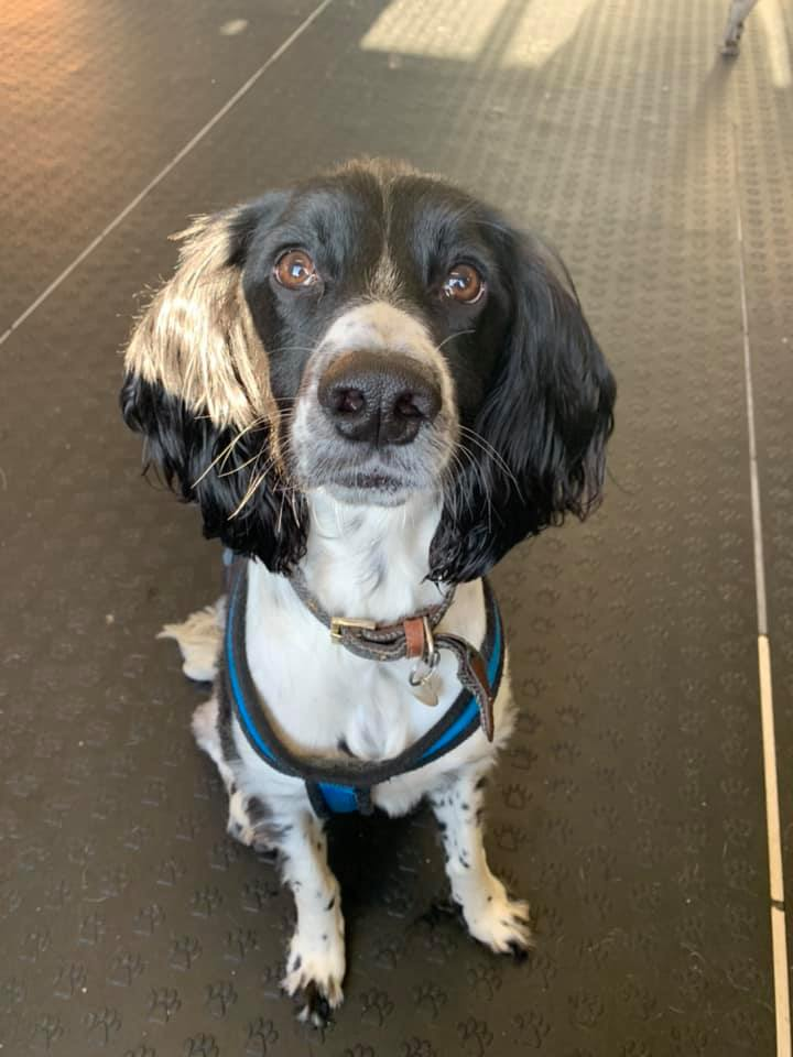 Our day care unit provides a consistent, fun and caring setting for your dog to play, relax and socialise so you can focus & concentrate on the day job.